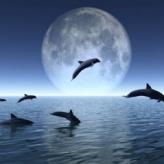 dauphins_sautant