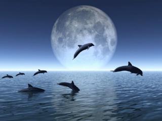 La fluidité du dauphin #1: l'intelligence intuitive